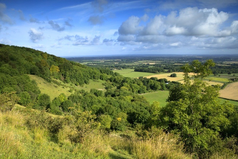 View north in August at Black Cap, South Downs, East Sussex