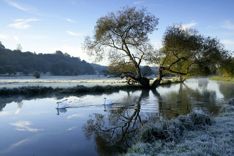 A frosty winter scene with swans gliding on the water at the River Wey Navigations, Surrey